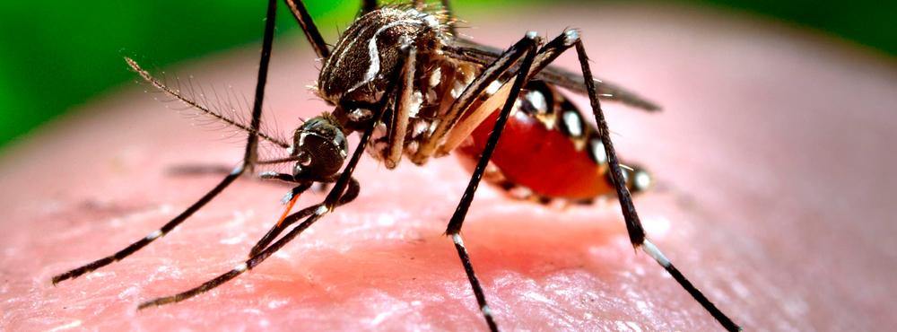 ¿Qué es y cómo prevenir el virus Zika?